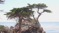 The Lone Cypress. Pebble Beach. Stock Footage