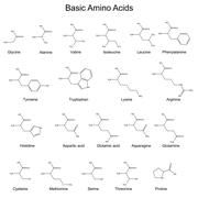 Skeletal strutures of basic amino acids Stock Illustration