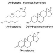 Structural formulas of male sex hormones - stock illustration