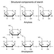 Structural components of starch Stock Illustration
