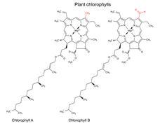Structural chemical formulas of plant pigments chlorophylls - stock illustration