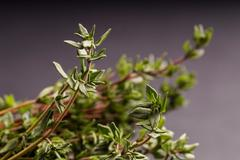 Stock Photo of bunch of Thyme