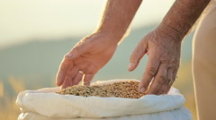 Male farmer hands with golden wheat grains countryside scenery slow motion Stock Footage