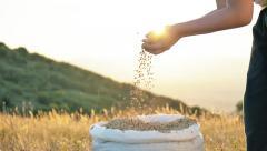 Young boy pour golden grains sack hands nature sunlight slow motion Stock Footage