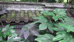 Greens Plants And Trees Chinese Garden Wall Stock Footage
