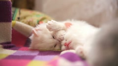 Two white kitten playing sleeps bite each other one Stock Footage