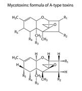 General structural chemical formulas of mycotoxins of A-type - stock illustration