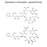 Microcystins - general chemical structural formula - stock illustration