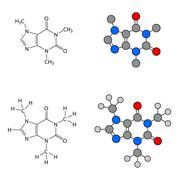 Caffeine molecule - structural chemical formulas and models Stock Illustration