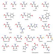 Amino acids -  main structural chemical formulas Stock Illustration