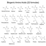 Twenty two biogenic amino acids - chemical formulas - stock illustration