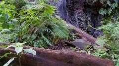 roten log jungel stream tropical island - stock footage