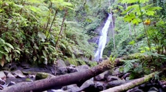 Small jungel waterfall with falling tree on stream bed Stock Footage