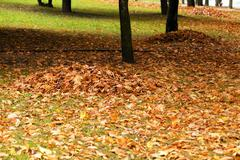 Fallen leaves. City Park. Stock Photos