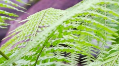 Tropical fern zoon out to jungle river Stock Footage
