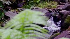 jungle fern rack focus to stream - stock footage