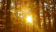 Golden sun light in forest foliage Stock Footage