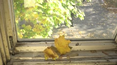The window sill in an old house, dirty glass, yellow leaves, 4k - stock footage