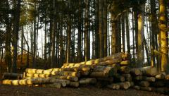 Cut down tree trunks in the woods Stock Footage