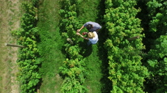 4K Aerial view above couple picking fruit in agricultural area.  - stock footage