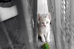 Shelter Animal Stock Photos