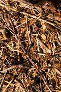 ant hill . close up - stock photo
