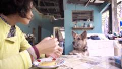 Dog jumps for food in breakfast time Stock Footage