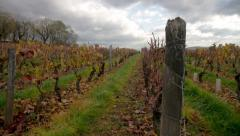 Vineyard timelapse in Beaujolais Stock Footage