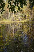 Swamp in wild taiga in autumn Kuvituskuvat