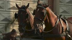 Two horses with blinkers in Prague Stock Footage