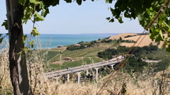 Vineyard with a viaduct, cultivated lands and the sea in the background Stock Footage
