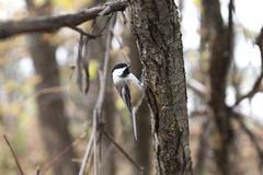Bird House Sparrow Stock Photos