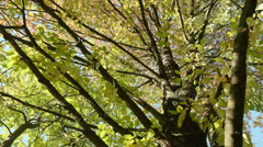 Up to the tree crown. Autumn daytime. Smooth dolly shot. Stock Footage