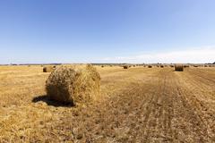harvesting cereals .  field - stock photo