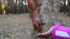 Squirrel took the nut from his hand and climbed down the tree. Stock Footage