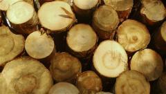 Tree trunks wood pile - stock footage