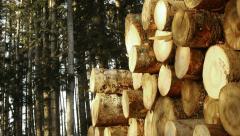 Wood pile of sawn tree trunks - stock footage