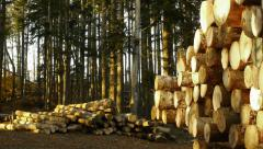 Stacked timber logs in coniferous forest Stock Footage