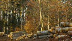 Stacked tree trunks in the woods Stock Footage
