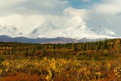 Plants Ground Cover Change Color Alaska Mountains Autumn Season Stock Photos