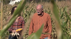 Man and woman walking through a cornfield inspecting crops Stock Footage
