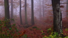 Forest on a foggy day on Swedish countryside Stock Footage