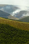 High Altitude Forest Deliberately Set To Fire - stock photo
