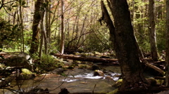 autumn river mossy rocks appalachia - stock footage