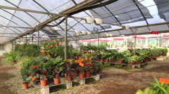 Wideshot of plants inside a greenhouse - stock footage