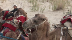 Young Uyghur boy with camels, Xinjiang China Stock Footage