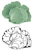 Stylized cabbage Stock Illustration