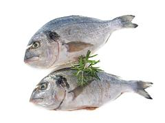 Gilt-head bream - stock photo