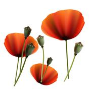 Set of Poppy green and red capsule on white background - stock illustration