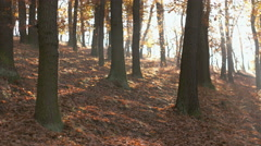 Fall Season in the Forest - stock footage